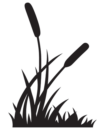 shrubs: Silhouette reed isolated on white background Illustration