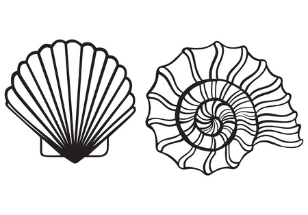 clip art draw: Sea shells isolated on white background