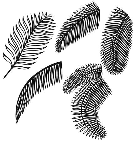 silueta hoja: Conjunto de hojas de palmera aisladas sobre fondo blanco