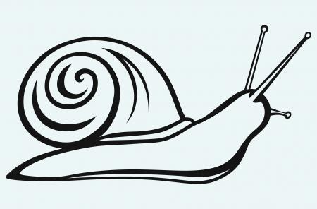 salyangoz: Salyangoz mavi zemin üzerine izole Çizim