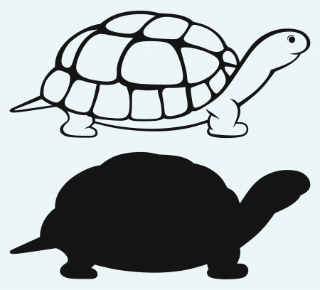 tortoise: Sea turtle isolated on blue background