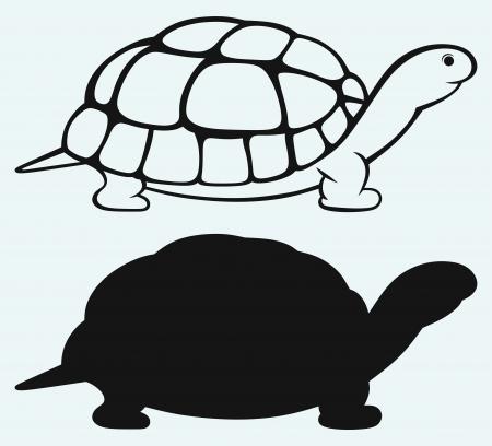 turtle isolated: Tortuga de mar aislado en el fondo azul