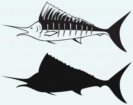saltwater fish: Pesce vela pesci di mare isolato su sfondo blu Vettoriali