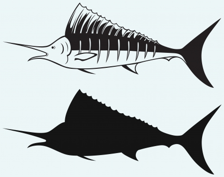 blue marlin: Sailfish saltwater fish isolated on blue background