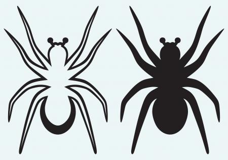 tarantula: Tarantula spider isolated on blue background Illustration