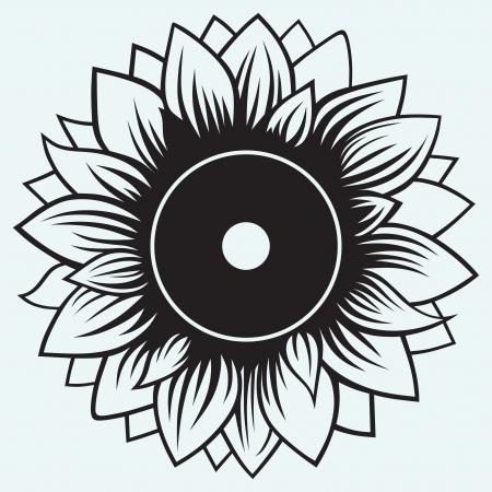 Sunflower isolated on blue background Illustration