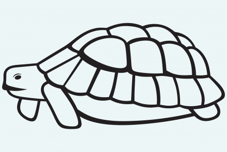 Sea turtle isolated on blue background Vector