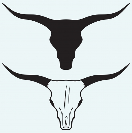 ox: Skull of a bull isolated on blue background