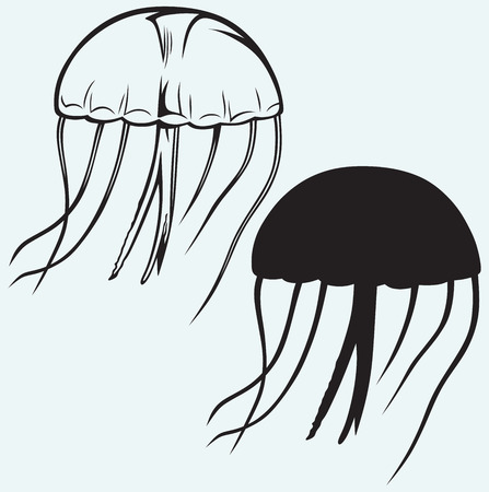 Jellyfish isolated on blue background Vector