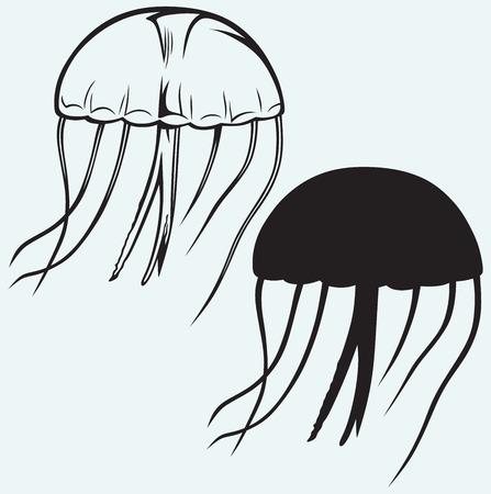 oceanography: Meduse isolato su sfondo blu