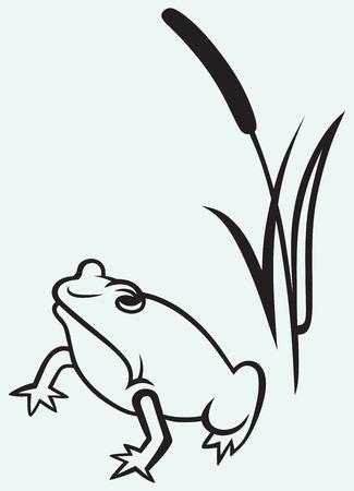 rana: Frog near reed isolated on blue background Illustration