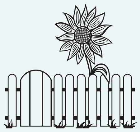garden fence: Sunflower and fence isolated on blue batskground
