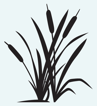 rietkraag: Silhouette reed op een witte achtergrond Stock Illustratie