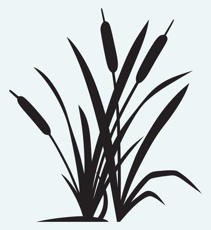 Silhouette Schilf auf weißem Hintergrund Standard-Bild - 25944225