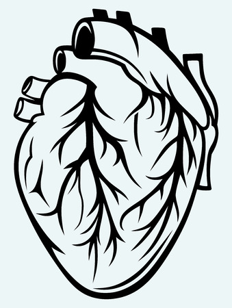 permit: Human heart isolated on blue background Illustration