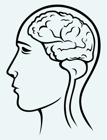 Human brain and head  Image isolated on blue background Vector