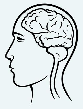 neuroscience: Human brain and head  Image isolated on blue background Illustration