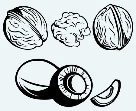 画像青の背景に分離されたココナッツおよびクルミ