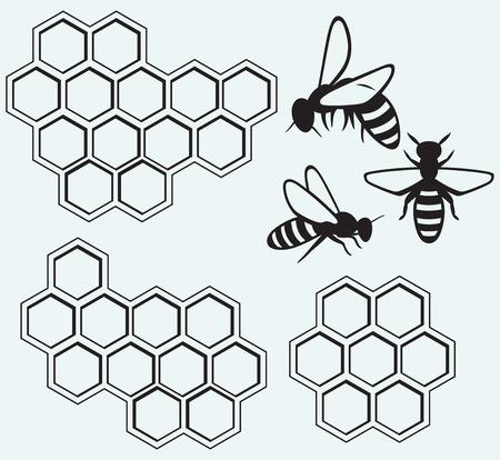 abeja: Abejas en células de la miel aislado en azul batskground