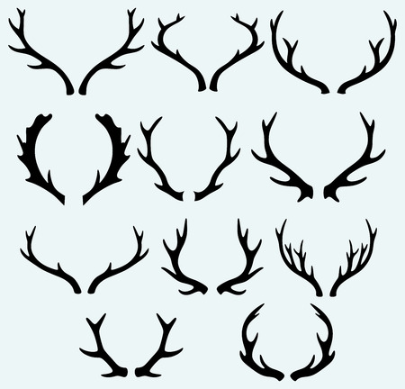 horny: Deer horns  Isolated on blue background