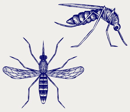 dengue: Mosquito  Doodle style