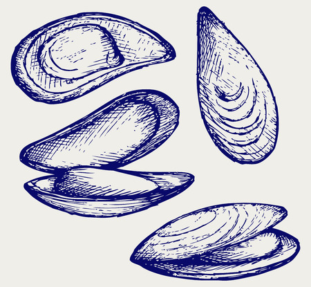 Cooked lipped mussel  Doodle style