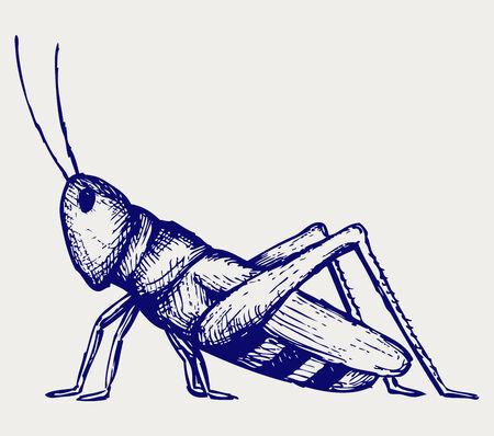 wart: Grasshopper  Doodle style