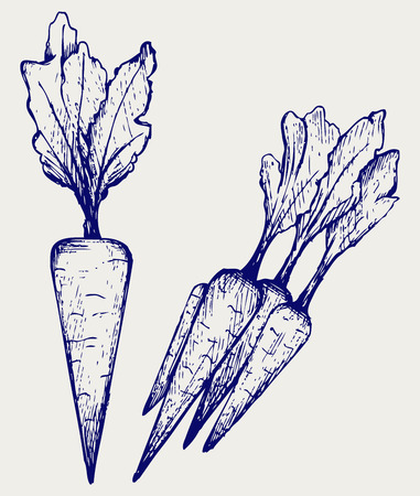 linework: Carrot vegetable with leaves  Doodle style Illustration