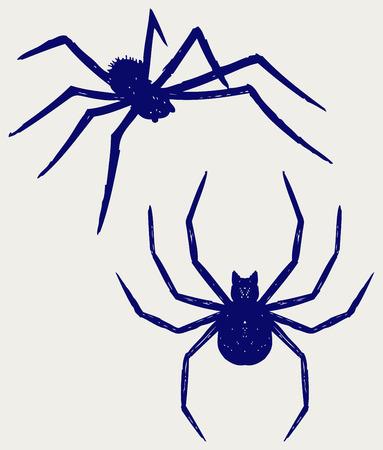arachnophobia: Black spider  Doodle style Illustration