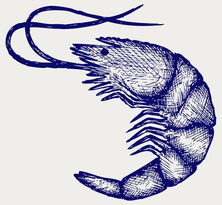 krill: Boiled shrimp  Doodle style