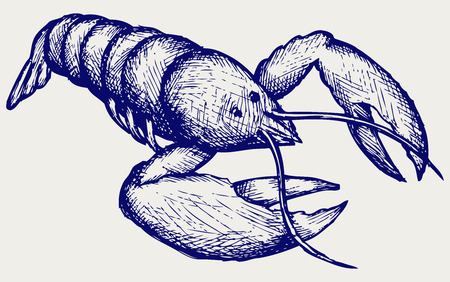 pincers: Crayfish sketch  Doodle style
