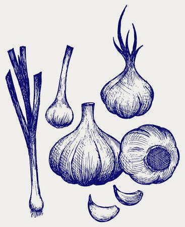 garlic clove: Heads of garlic  Young garlic  Doodle style Illustration