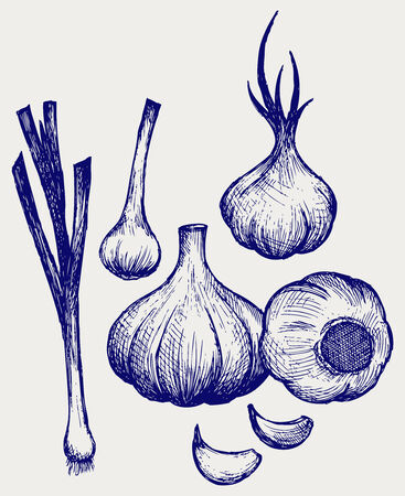 Heads of garlic  Young garlic  Doodle style Illustration