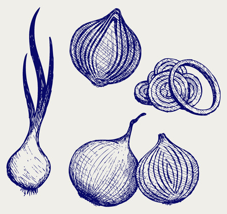 unpeeled: Red onion bulb and rings  Fresh green onions Illustration