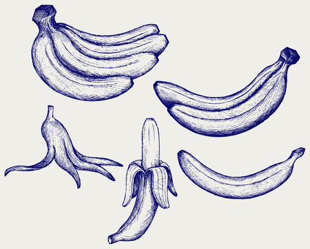 peeled banana: Bunch of bananas, peeled banana and banana peel Illustration