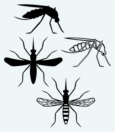 insect mosquito: Silhouettes of mosquito  Image isolated on blue background