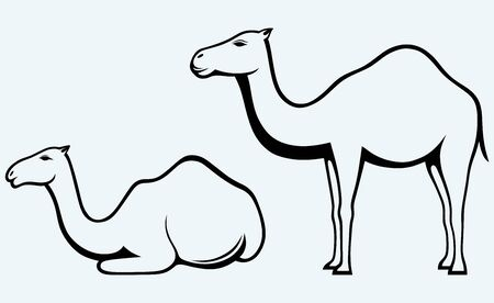 Silhouettes of camel  Image isolated on blue background