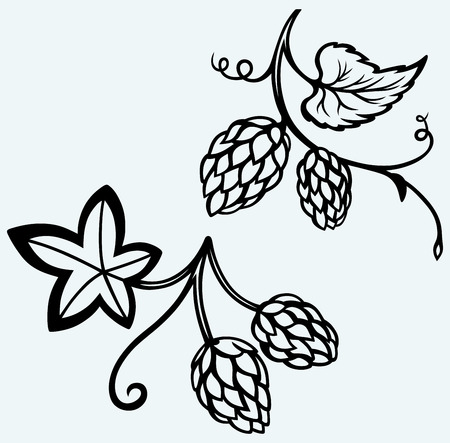 Ingredience na pivo Chmel Image izolovaných na modrém pozadí Ilustrace