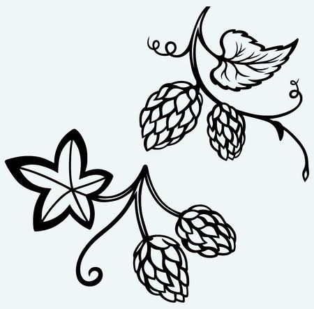 cerveza negra: Ingredientes para el lúpulo de la cerveza de imagen aislados sobre fondo azul