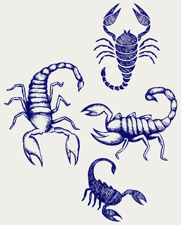 sub tropical: Scorpion Pandinus imperator. Collection. Doodle style Illustration