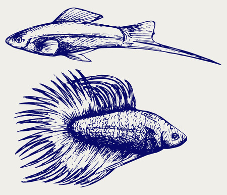 Siamese fighting fish and Xiphophorus hellerii. Doodle style Illustration