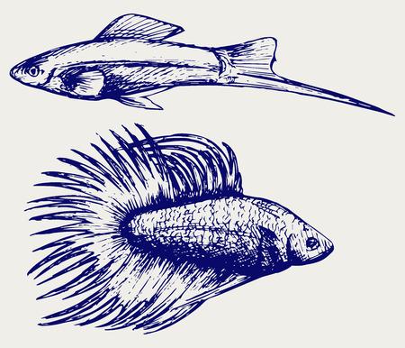 siamese: Siamesische Kampffische und Xiphophorus hellerii. Doodle Stil