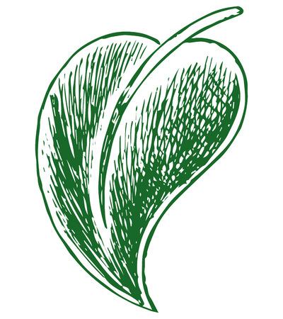 macro: Macro green leaves. Doodle style Illustration