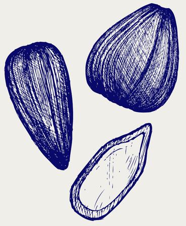 sunflower seeds: Sunflower seeds. Doodle style Illustration