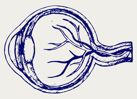 linework: Human eye anatomy. Doodle style Illustration