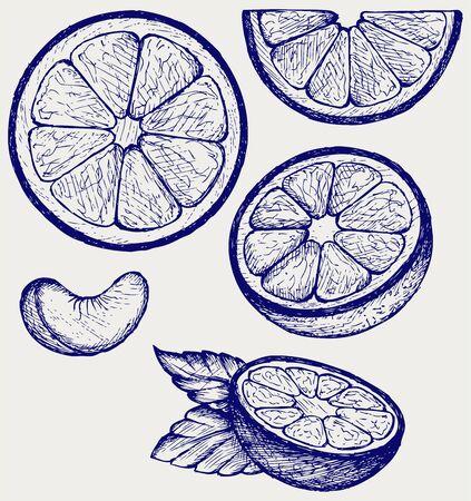 naranjo: Naranjas frutas con hojas verdes y rodajas. Doodle estilo