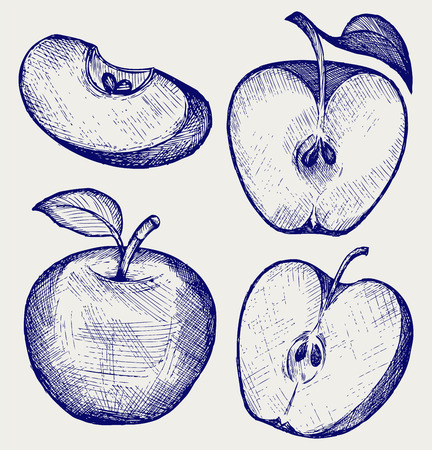 apple slice: Fresh apple with leaf and slice. Doodle style