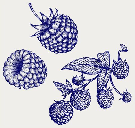 linework: Ripe raspberry with leaf. Doodle style Illustration