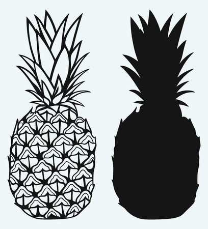 Ripe tasty pineapple isolated on blue background Vectores