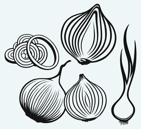 Red onion bulb and rings. Fresh green onions isolated on blue background